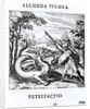 A knight defeating 'Rot' which is embodied by a dragon by Russian School