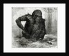 The Gorilla at the Zoological Society's Gardens by Charles Whymper