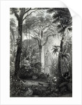 Scene in a Brazilian Forest by Henry George Hine