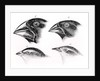 Darwin's bird observations by English School