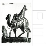 Camel by Melchior Lorck
