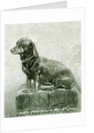The Dog Jacob by English School