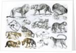 Carnivorous Animals by English School