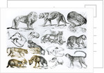 Carnivorous Animals by English School