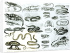 Reptiles, Serpents and Lizards by English School