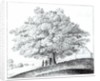 Hollow Tree at Hampstead by Wenceslaus Hollar