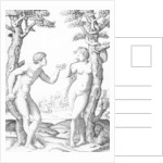 Adam and Eve by Raphael