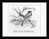 The Cole-Titmouse by Thomas Bewick
