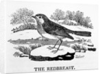 The Redbreast by Thomas Bewick