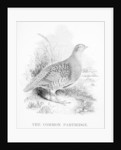 The Common Partridge by William Yarrell