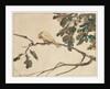 Canary on an Oak Tree Branch by Adolph Friedrich Erdmann von Menzel