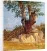 A Tree in Campagna by Heinrich Reinhold