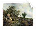 Landscape with a Hut by Jacob Isaaksz. or Isaacksz. van Ruisdael