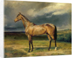 'Abdul Medschid' the chestnut arab horse by Carl Constantin Steffeck