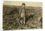 6 year old Jo pulling sugar beets on a farm near Sterling, Colorado by Lewis Wickes Hine