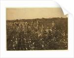 Family picking cotton near McKinney, Texas by Lewis Wickes Hine