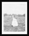 Eight year old Jennie Camillo from Philadelphia picking cranberries at Theodore Budd's Bog, Turkeytown by Lewis Wickes Hine