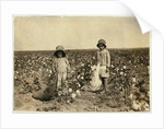Jewel and Harold Walker, 6 and 5 years old, pick 20 to 25 pounds of cotton a day at Geronimo by Lewis Wickes Hine