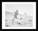 Bedouin riding a camel by Anonymous