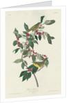 Nashville Warbler by John James Audubon
