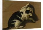 Cat playing by Adriaen van de Velde