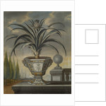Pineapple plant by David von Coln