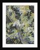 Acacia in Flower, c.1889 by Vincent van Gogh