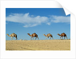 Camel train by Unknown