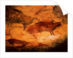 Bison from the Caves at Altimira by Prehistoric