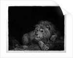 A Lion (A Recumbent Lion) by George Stubbs