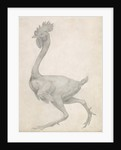 Fowl: Lateral view with Most Feathers Removed by George Stubbs