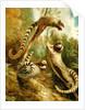 A Marmoset in Three Attitudes by George Garrard