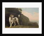A Foxhound by George Stubbs