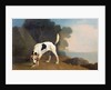 Foxhound on the Scent by George Stubbs