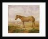 Old Billy, a Draught Horse, Aged 62 by Charles Towne