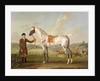 Scipio, Colonel Roche's Spotted Hunter by Thomas Spencer