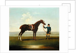 A Chestnut Horse (possibly Old Partner) held by a Groom by James Seymour