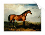 Eagle, a Celebrated Stallion by James Ward