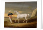 Signal, a grey Arab, with a Groom in the Desert by David of York Dalby