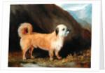 A Dandie Dinmont Terrier, 1848 by John E. Ferneley