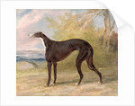 One of George Lane Fox's Winning Greyhounds: the Black and White Greyhound Bitch, Juno, also known as Elizabeth by George Garrard