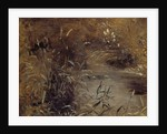Rushes by a Pool by John Constable