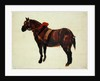 Study of a Working Horse by Thomas Sidney Cooper