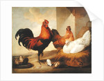 Domestic Cock, Hens and Chicks by Francis Barlow