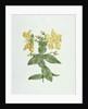 Feel-Fetch (Hypericum quartinianum) by James Bruce