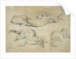 Ferrets by James Ward