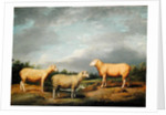 Ryelands Sheep, the King's Ram, the King's Ewe and Lord Somerville's Wether by James Ward