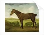 Brown Horse in a Hilly Landscape by English School
