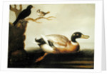 Mallard Duck and Other Birds by English School