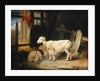 Heath Ewe and Lambs by James Ward